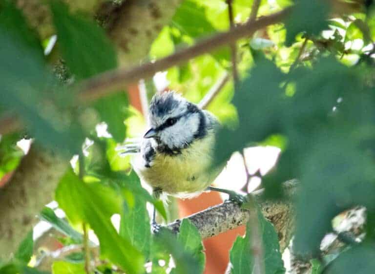 Umwelt Vogel im Baum